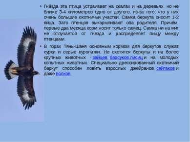 Гнёзда эта птица устраивает на скалах и на деревьях, но не ближе 3-4 километр...