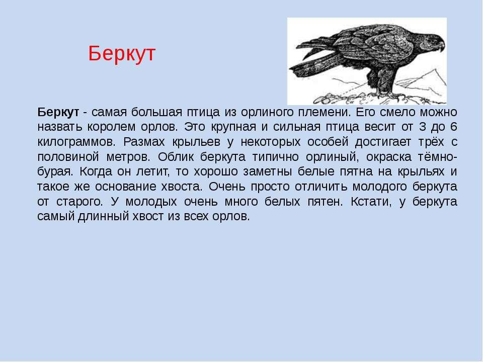 Беркут Беркут- самая большая птица из орлиного племени. Его смело можно назв...