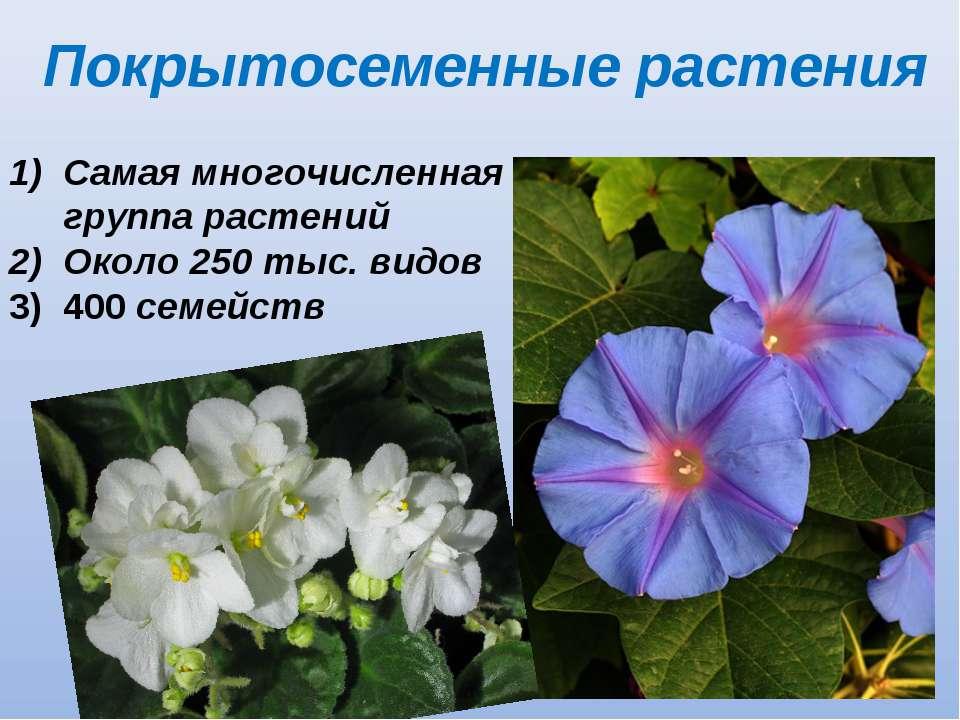 Покрытосеменные растения Самая многочисленная группа растений Около 250 тыс. ...