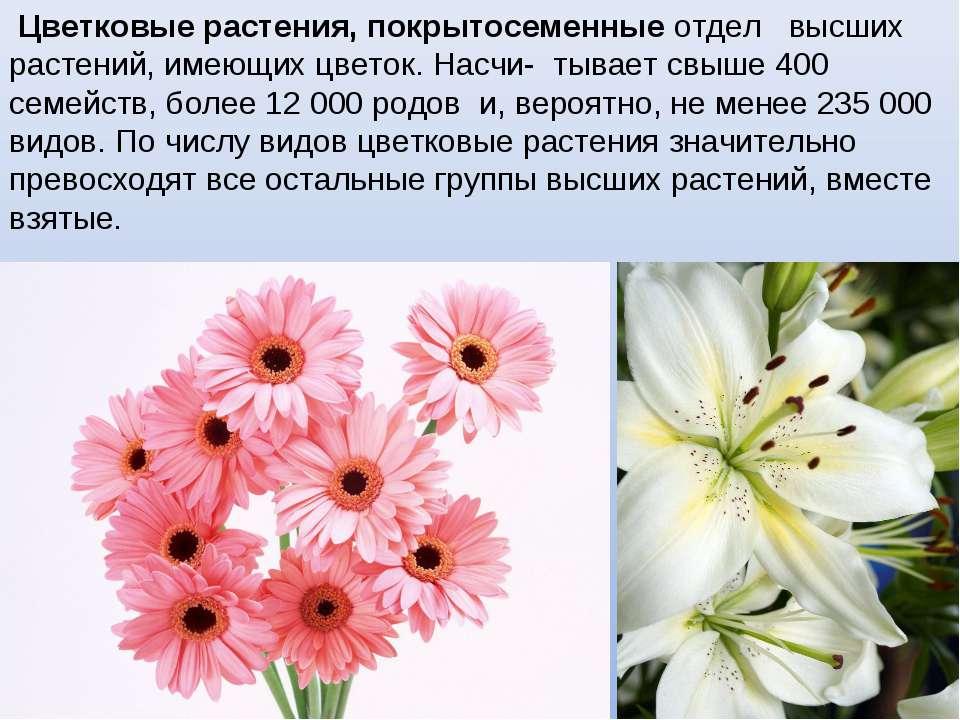 Цветковые растения, покрытосеменные отдел высших растений, имеющих цветок. На...