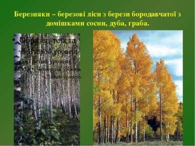 Березняки – березові ліси з берези бородавчатої з домішками сосни, дуба, граба.