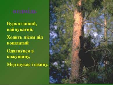 ведмідь Буркотливий, вайлуватий, Ходить лісом дід кошлатий Одягнувся в кожуши...