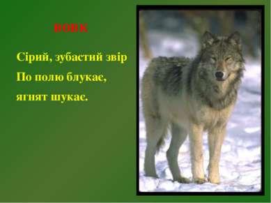вовк Сірий, зубастий звір По полю блукає, ягнят шукає.