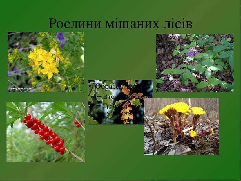 Рослини мішаних лісів
