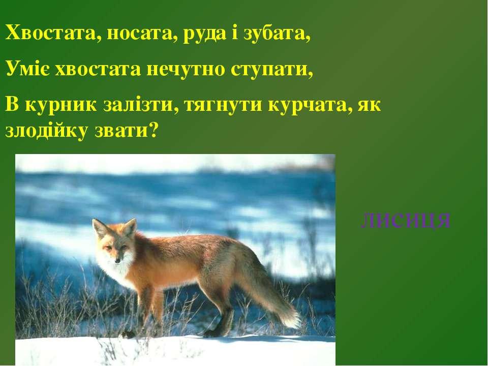 лисиця Хвостата, носата, руда і зубата, Уміє хвостата нечутно ступати, В курн...