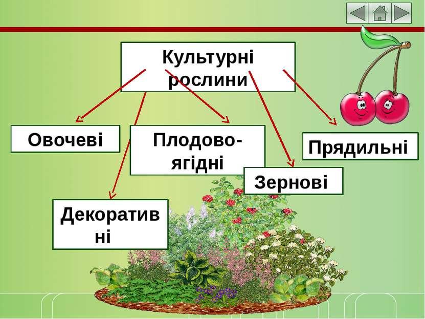 Культурні рослини Овочеві Плодово-ягідні Зернові Прядильні Декоративні