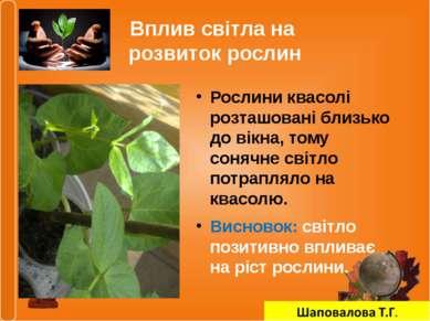 Вплив світла на розвиток рослин Рослини квасолі розташовані близько до вікна,...