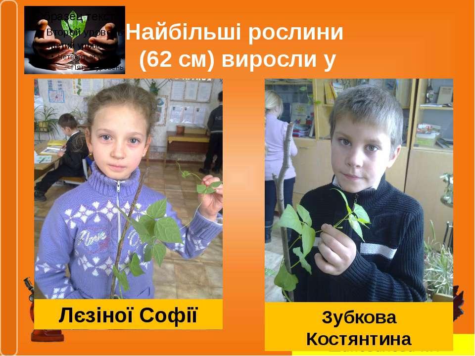 Найбільші рослини (62 см) виросли у Лєзіної Софії Зубкова Костянтина