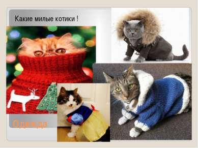 Одежда Какие милые котики !