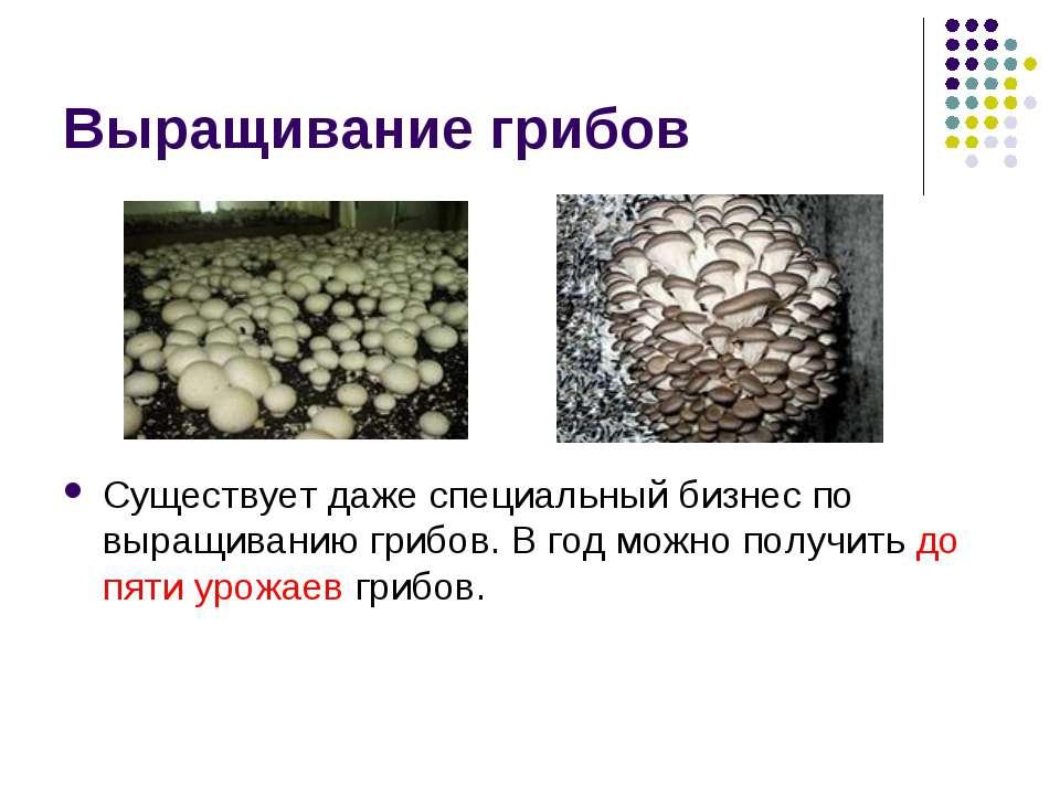 Выращивание грибов Существует даже специальный бизнес по выращиванию грибов. ...