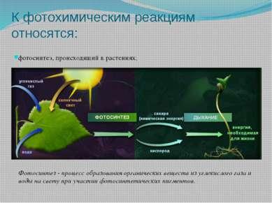 К фотохимическим реакциям относятся: фотосинтез, происходящий в растениях; Фо...