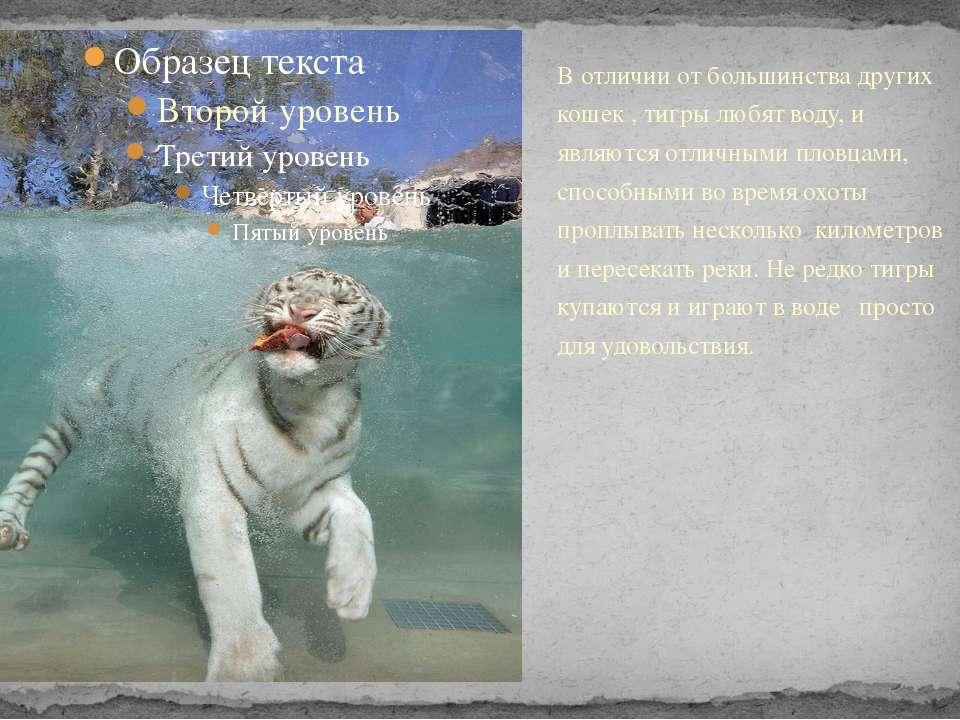 В отличии от большинства других кошек , тигры любят воду, и являются отличным...