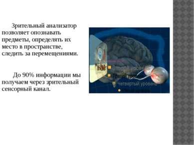 Зрительный анализатор позволяет опознавать предметы, определять их место в пр...