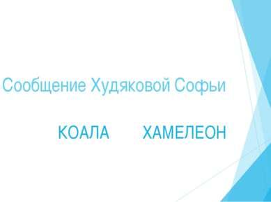 Сообщение Худяковой Софьи КОАЛА ХАМЕЛЕОН