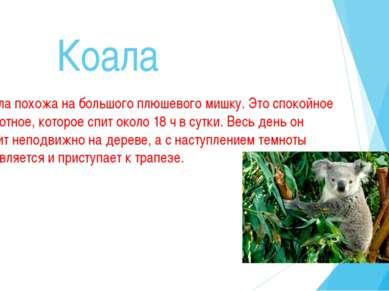 Коала Коала похожа на большого плюшевого мишку. Это спокойное животное, котор...