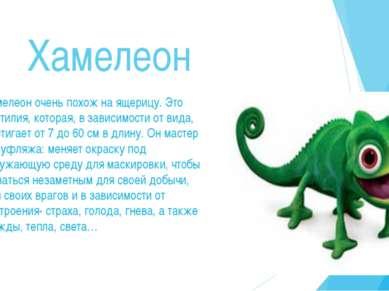 Хамелеон Хамелеон очень похож на ящерицу. Это рептилия, которая, в зависимост...