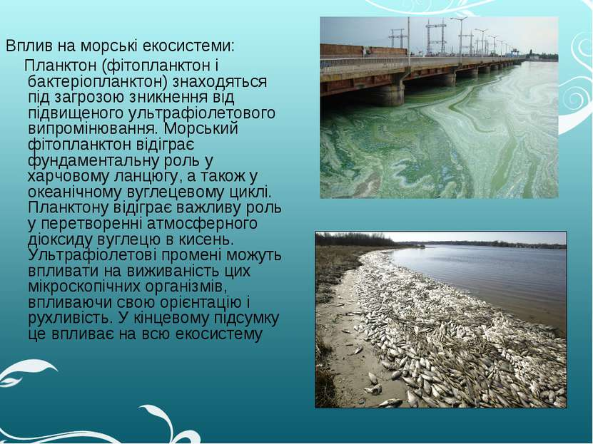 Вплив на морські екосистеми: Планктон (фітопланктон і бактеріопланктон) знахо...