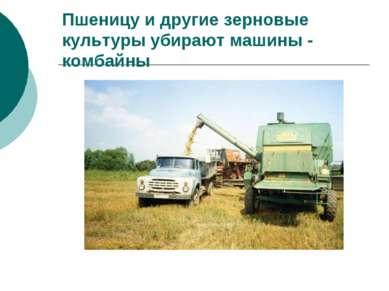 Пшеницу и другие зерновые культуры убирают машины - комбайны