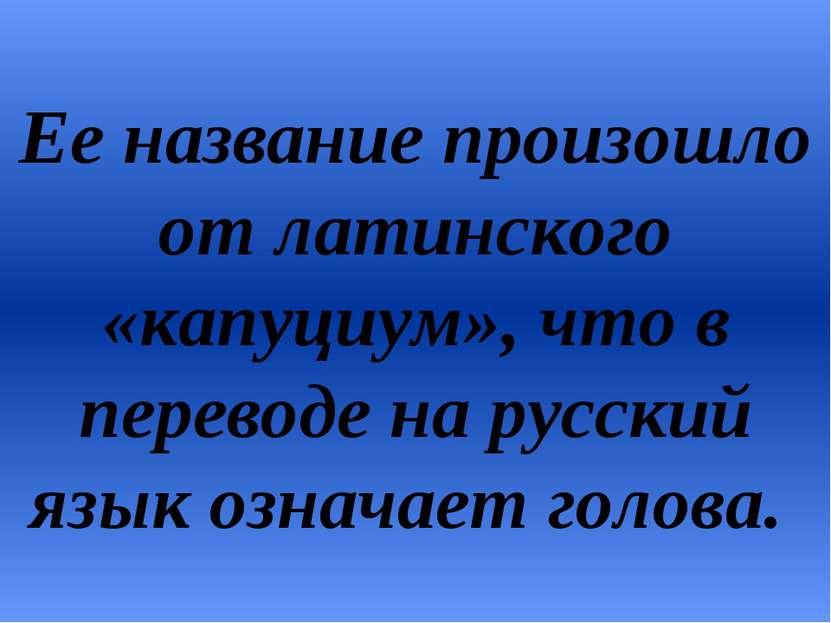 Ее название произошло от латинского «капуциум», что в переводе на русский язы...