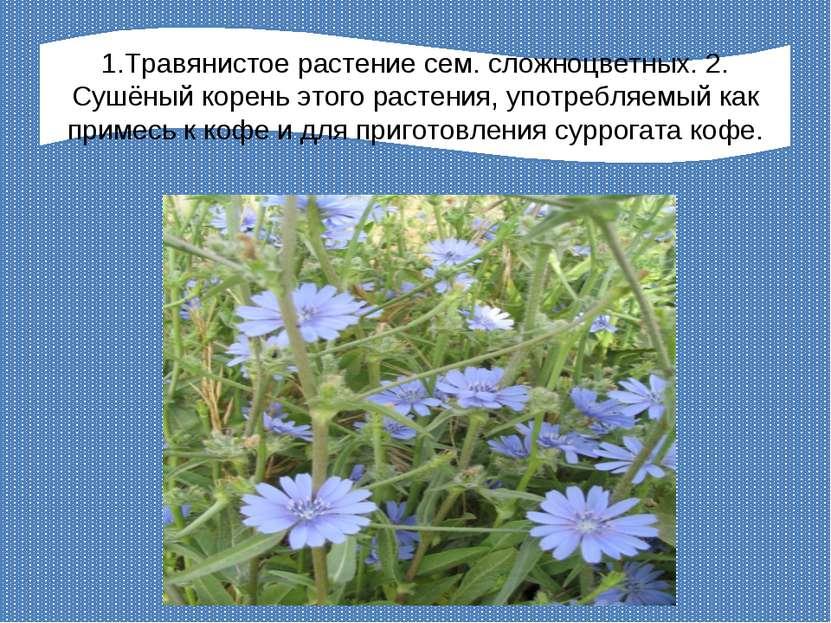 1.Травянистое растение сем. сложноцветных. 2. Сушёный корень этого растения, ...