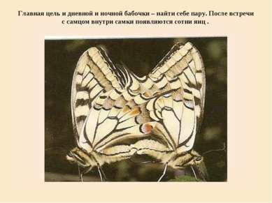Главная цель и дневной и ночной бабочки – найти себе пару. После встречи с са...
