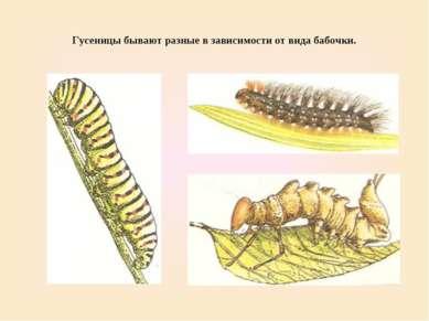 Гусеницы бывают разные в зависимости от вида бабочки.