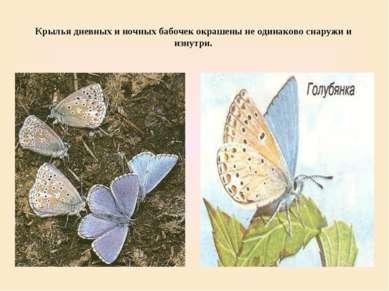 Крылья дневных и ночных бабочек окрашены не одинаково снаружи и изнутри.