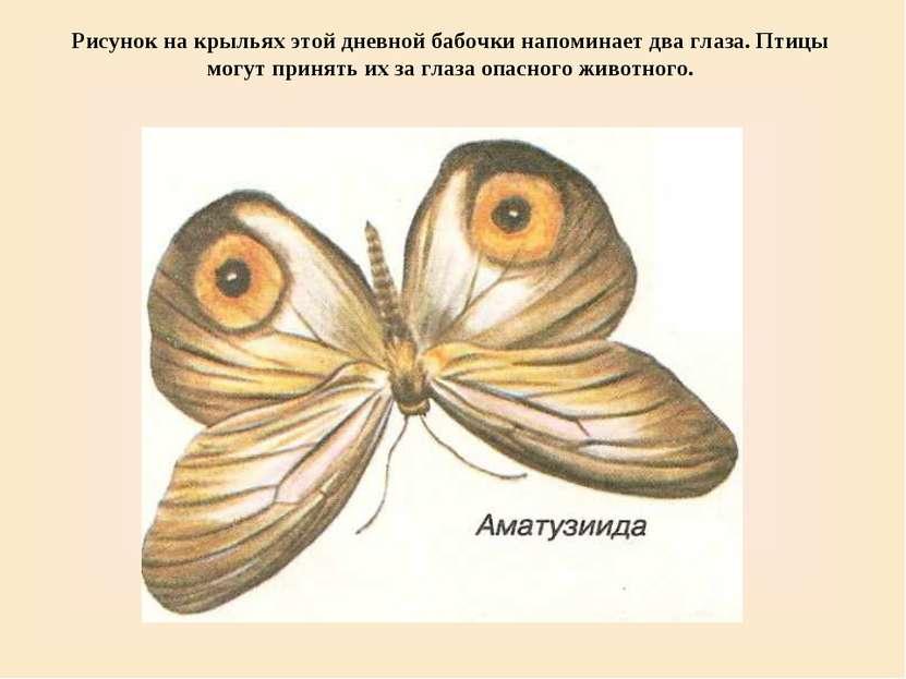 Рисунок на крыльях этой дневной бабочки напоминает два глаза. Птицы могут при...