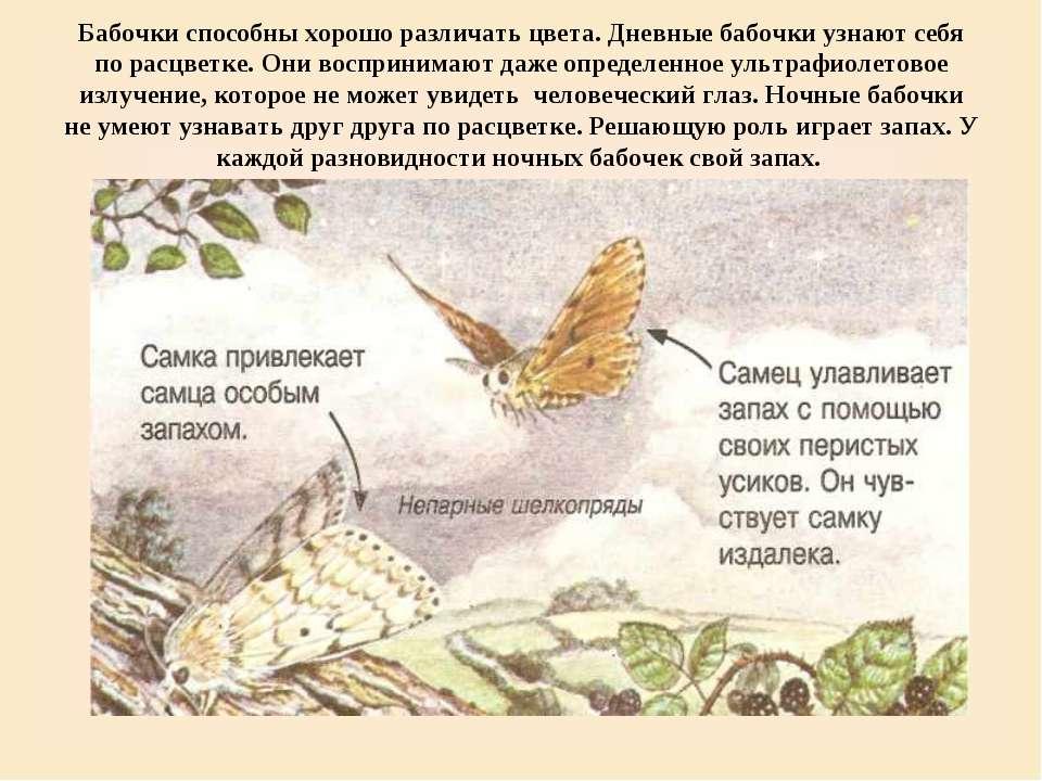 Бабочки способны хорошо различать цвета. Дневные бабочки узнают себя по расцв...