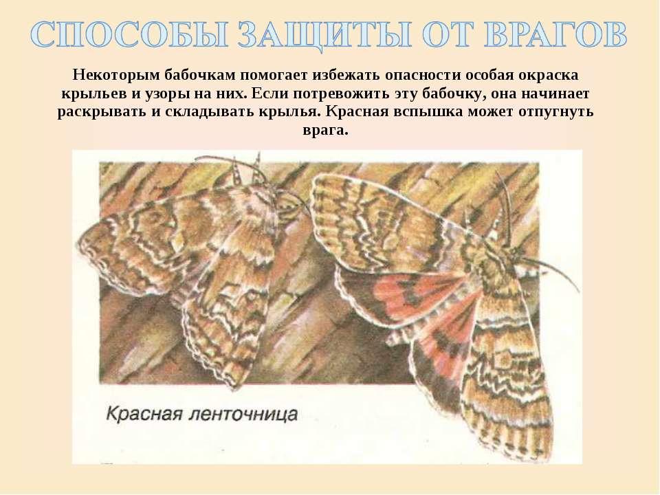 Некоторым бабочкам помогает избежать опасности особая окраска крыльев и узоры...