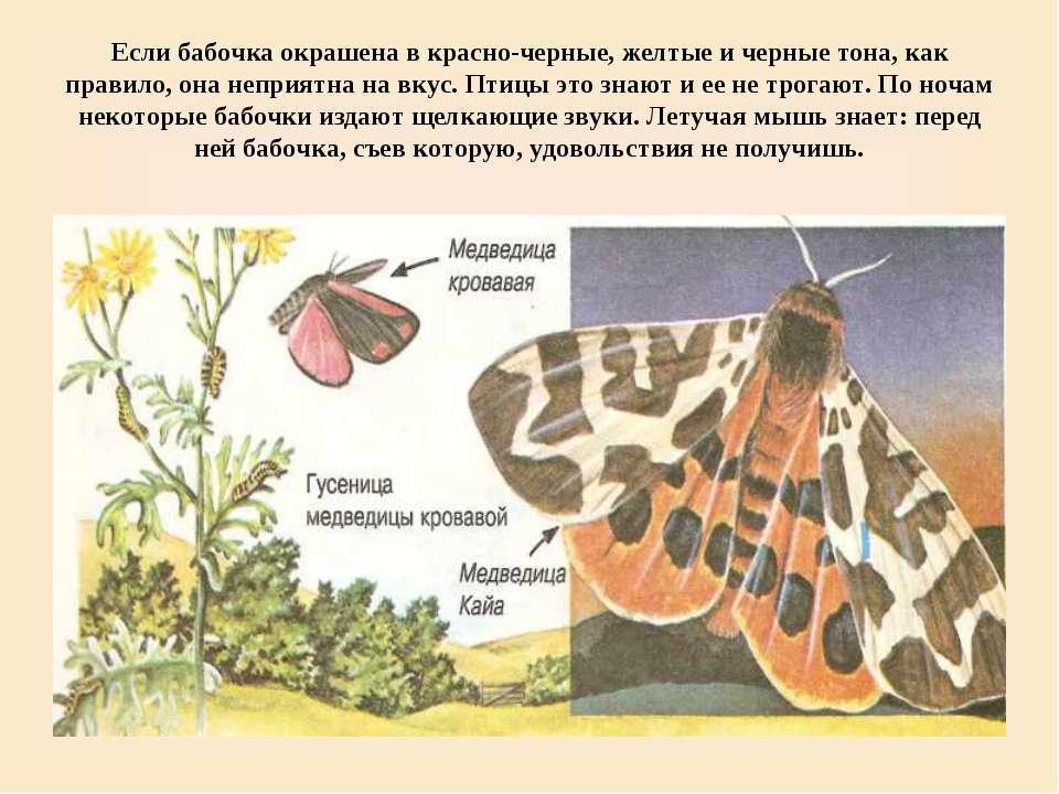 Если бабочка окрашена в красно-черные, желтые и черные тона, как правило, она...