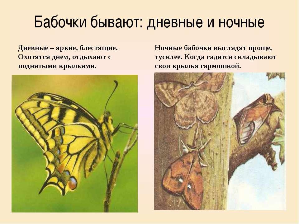 Бабочки бывают: дневные и ночные Дневные – яркие, блестящие. Охотятся днем, о...