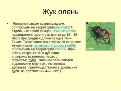 Жук олень Является самым крупным жуком, обитающим на территорииЕвропы[3][4]:...