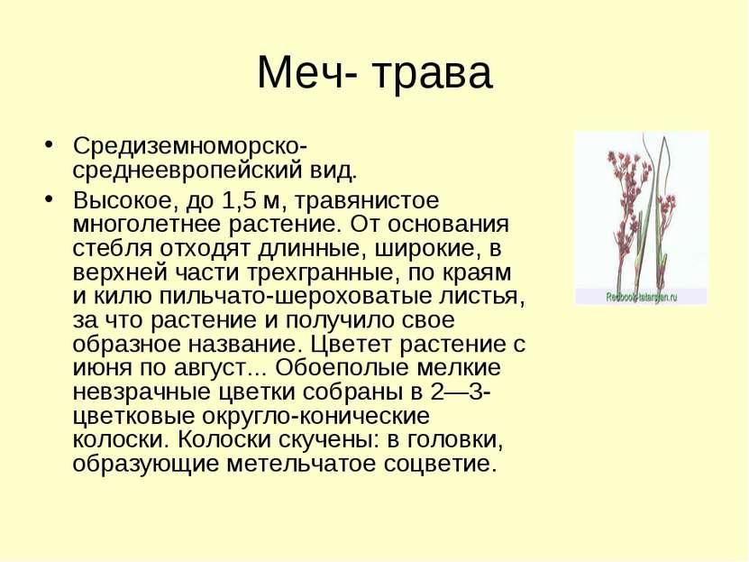 Меч- трава Средиземноморско-среднеевропейский вид. Высокое, до 1,5 м, травяни...
