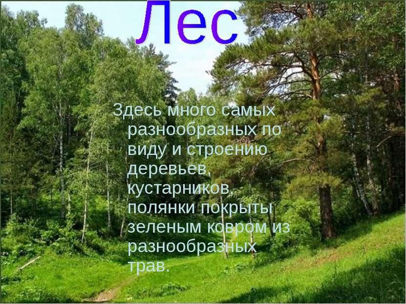 Здесь много самых разнообразных по виду и строению деревьев, кустарников, пол...