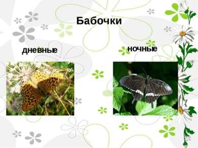 Бабочки дневные ночные