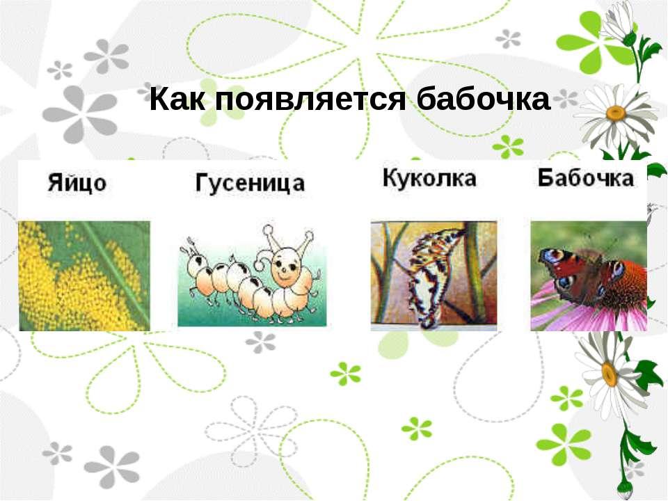 Как появляется бабочка