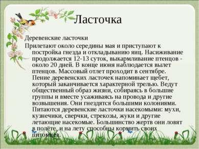 Ласточка Деревенские ласточки Прилетают около середины мая и приступают к пос...