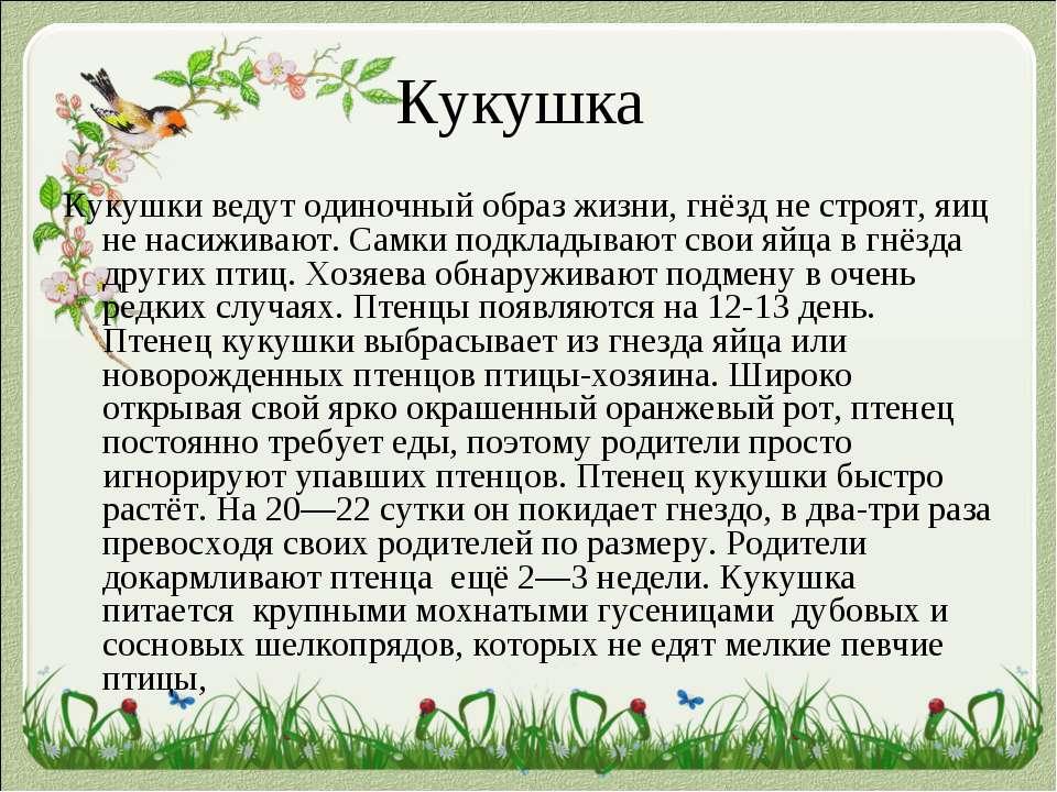 Кукушка Кукушки ведут одиночный образ жизни, гнёзд не строят, яиц не насижива...