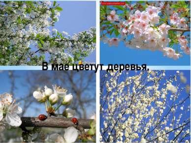 В мае цветут деревья.