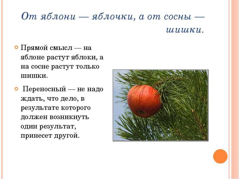 От яблони— яблочки, а от сосны— шишки. Прямой смысл— на яблоне растут ябло...