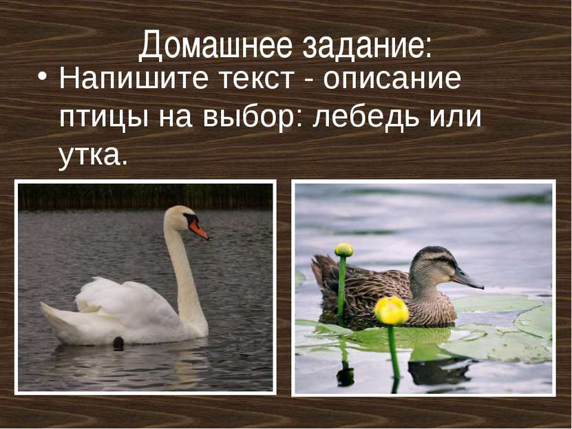 Домашнее задание: Напишите текст - описание птицы на выбор: лебедь или утка.