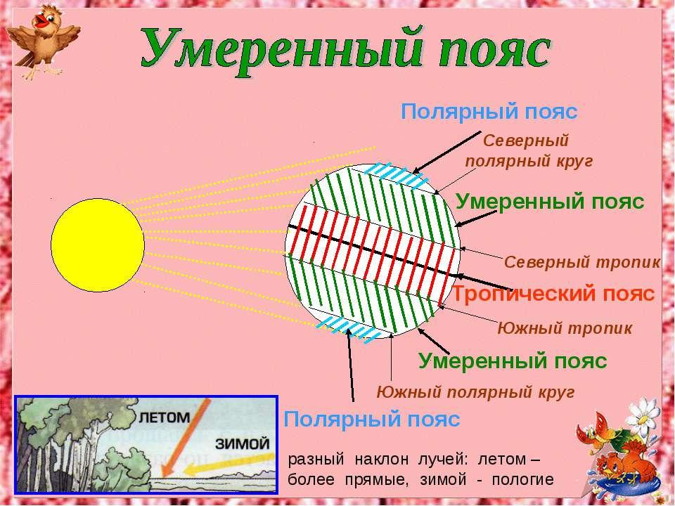 Полярный пояс Полярный пояс Южный полярный круг Северный полярный круг Тропич...