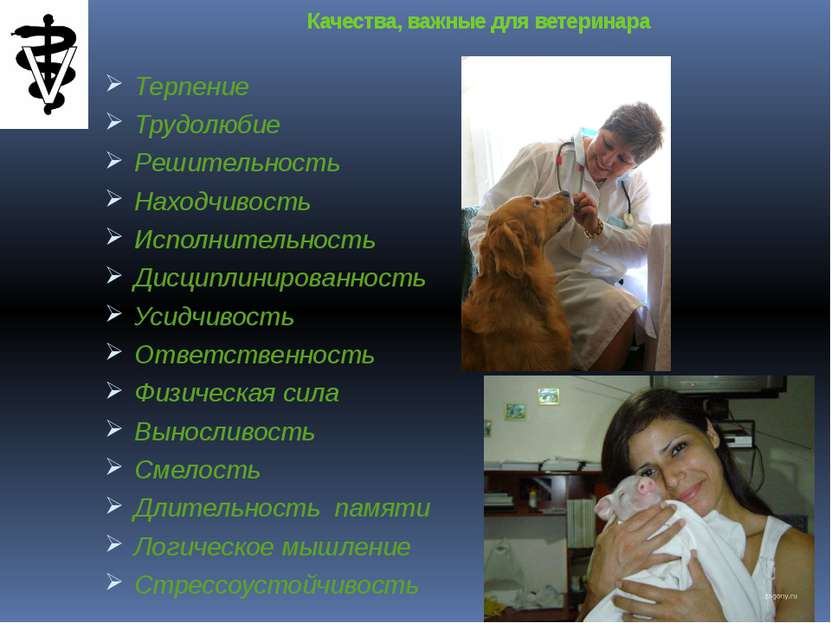 Качества, важные для ветеринара Терпение Трудолюбие Решительность Находчивост...