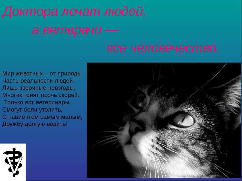 Доктора лечат людей, а ветврачи — все человечество. Мир животных – от природы...