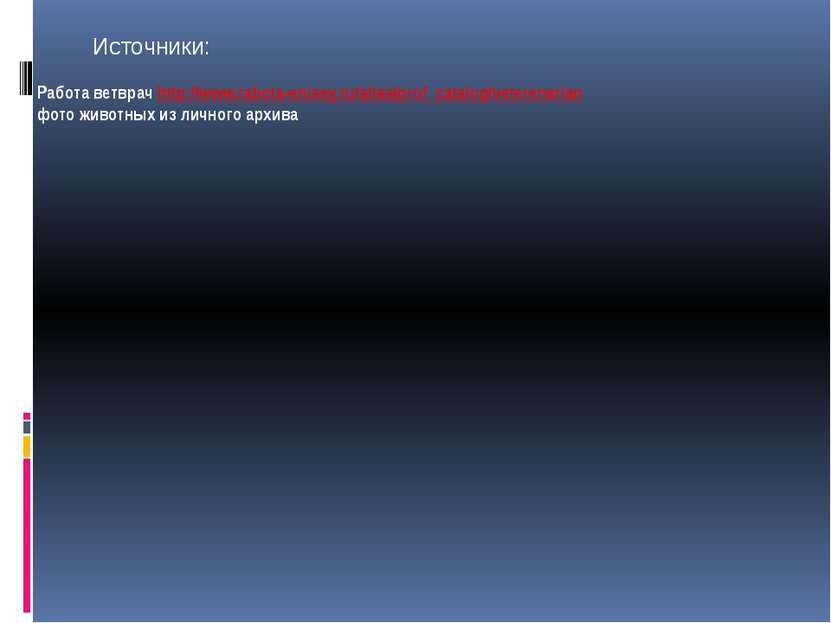 Работа ветврач http://www.rabota-enisey.ru/atlas/prof_catalog/veterenarian фо...