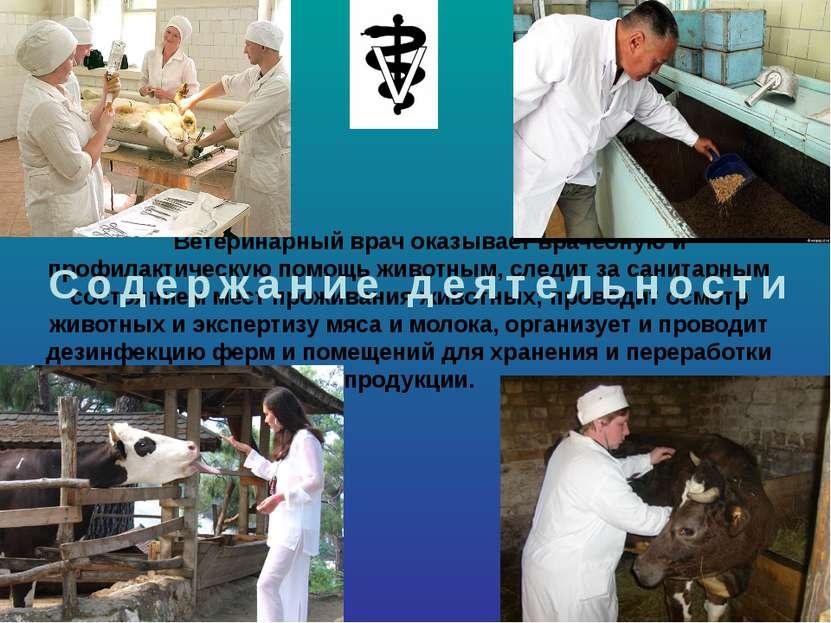 Ветеринарный врач оказывает врачебную и профилактическую помощь животным, сле...