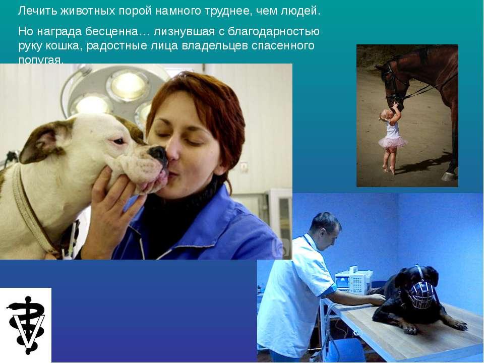 Лечить животных порой намного труднее, чем людей. Но награда бесценна… лизнув...