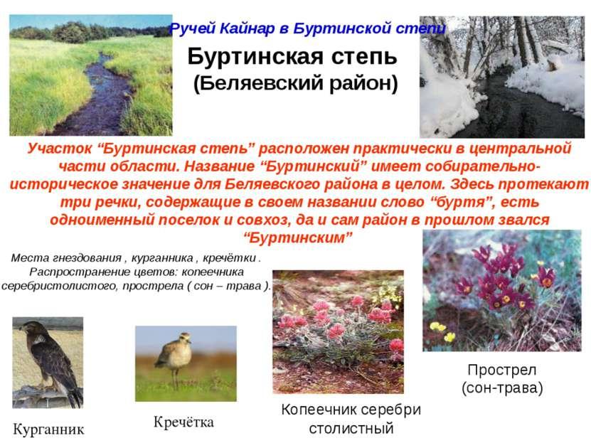 Презентацию на тему оренбургской заповедник