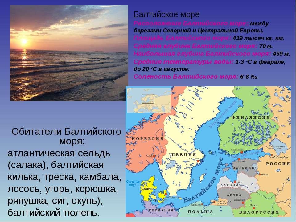 Обитатели Балтийского моря: атлантическая сельдь (салака), балтийская килька,...